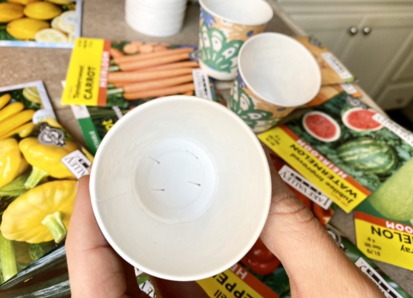 starting a vegetable garden from seeds using a dixie cup